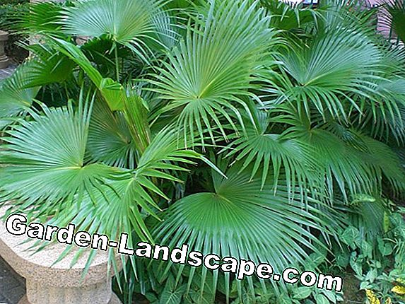 Tropical and exotic plants - care