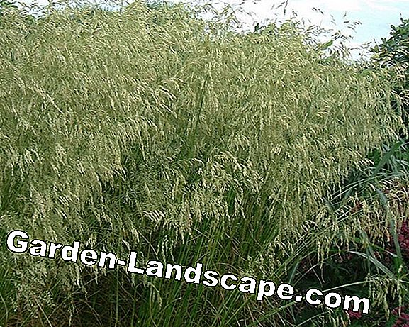 When to cut grasses - Instructions for evergreen ornamental grasses