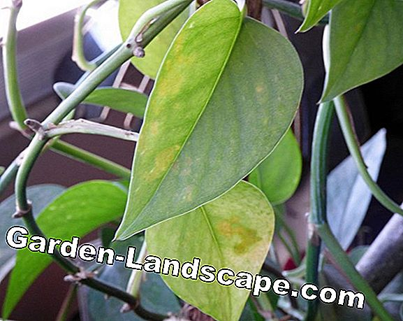 Yellow and brown leaves on houseplants - Causes & Tips