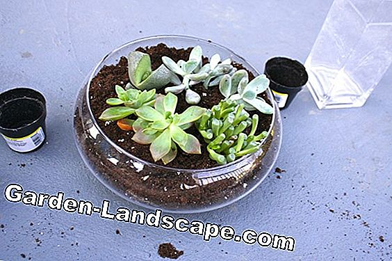 Can you still use old potting soil?