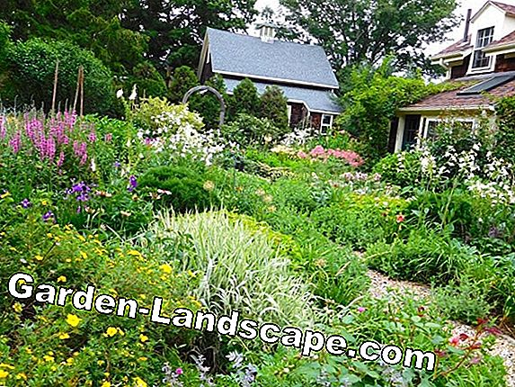 Prairie garden: stones, grasses, colorful flowers