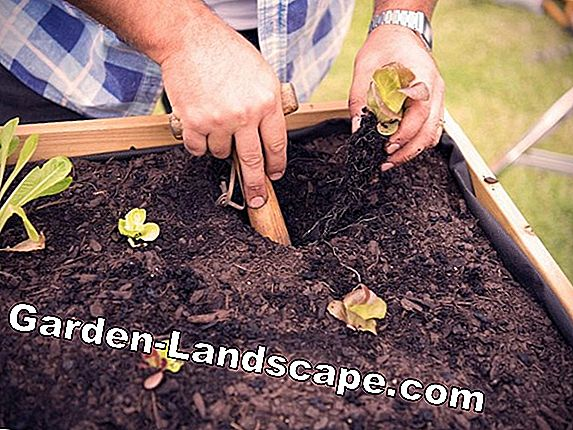 Layer by layer: How to properly fill your raised bed