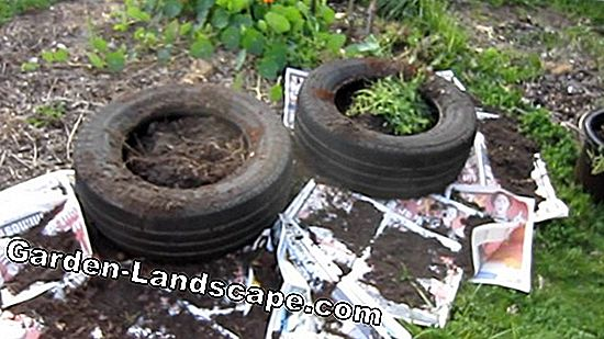 Use old car tires as raised beds