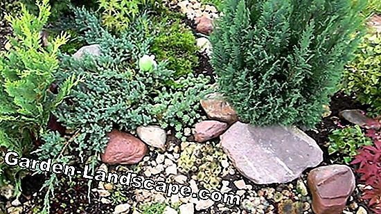 How to create a mini rock garden