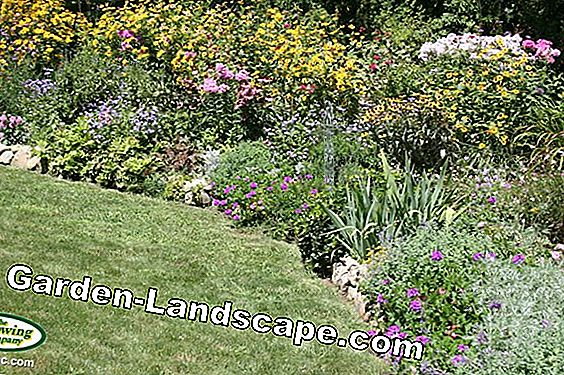 Easy-care perennial paradise