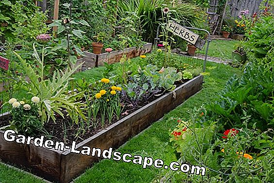 Mobile raised bed and Seramis products to win