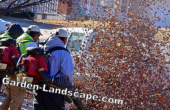 Noise pollution by leaf blowers