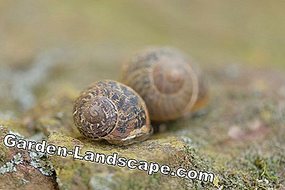 Help against snails: The best tips of our Facebook users