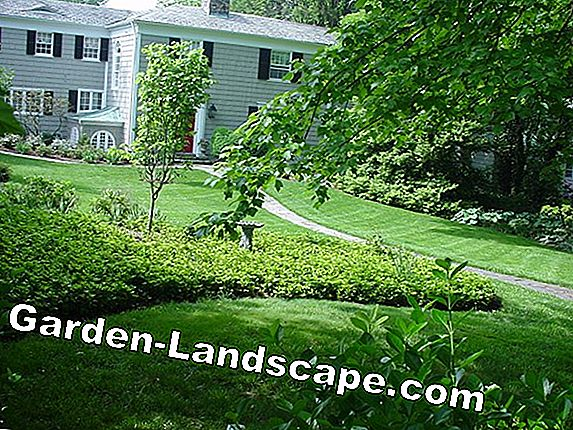Mow turf properly and maintain