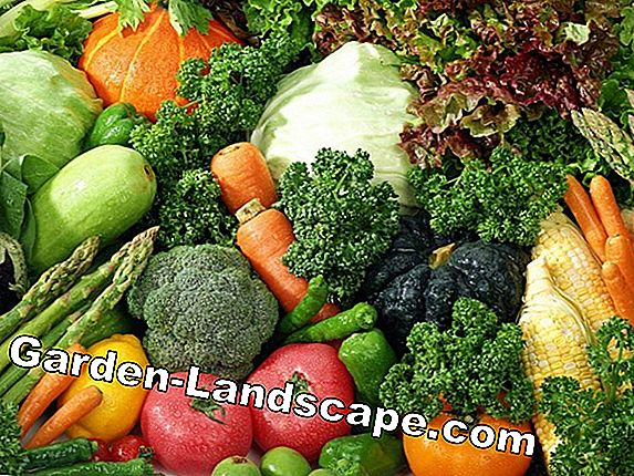 To grow fruit vegetables - types and care