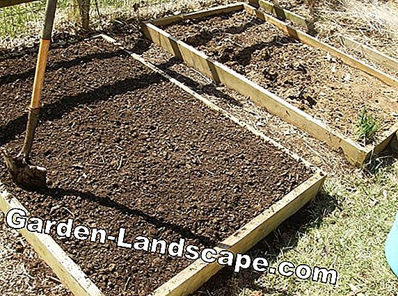 Instructions: Create and plant the manure bed
