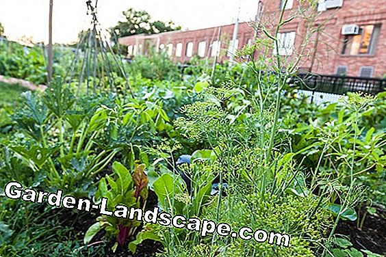 Vegetable garden & vegetables