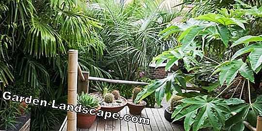 Exotic climbing plants for the conservatory
