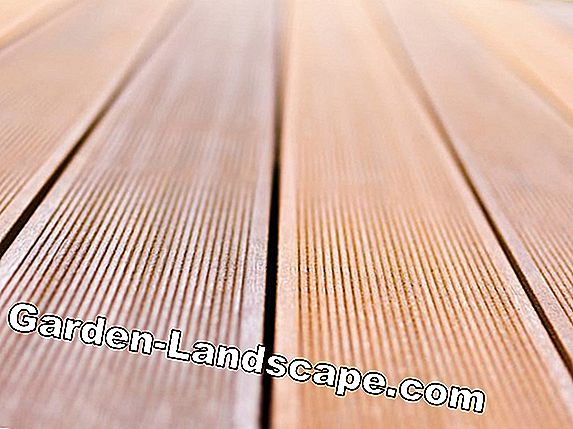 Bankirai / Bangkirai wood for terrace - care, price