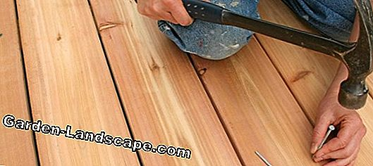 Decking from Massaranduba - laying, advantages + disadvantages