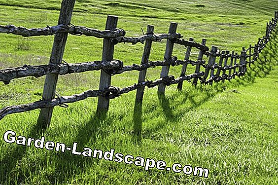 Fence on property boundary - what is allowed?