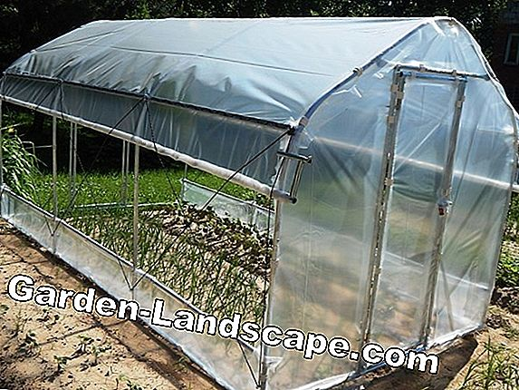 Folientunnel - the mini foil greenhouse and cold frame