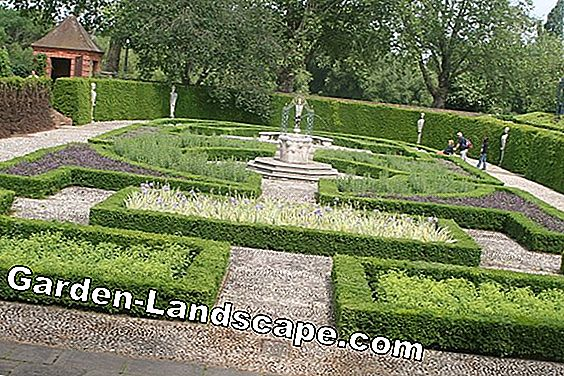 Hecke - creative garden design with hedges