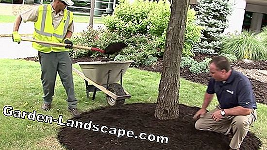 Lay lawn edging stones correctly and place in concrete