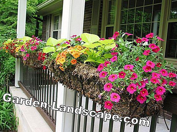 Other gardening for landscaping