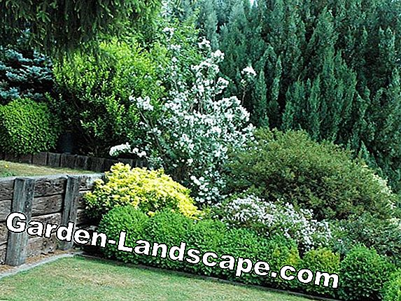 Create hedge - Hedge plants and planting plan