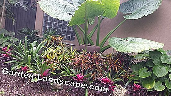 Plants for border planting