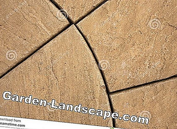 Prices for paving stones - head paving stones