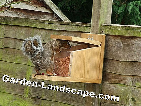 Build squirrels house yourself and hang it up properly