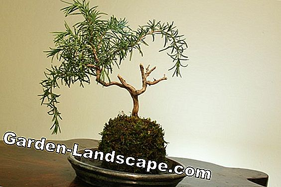 Bonsai Fertilizer - Composición y Aplicación