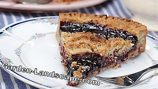 The Linzer Torte