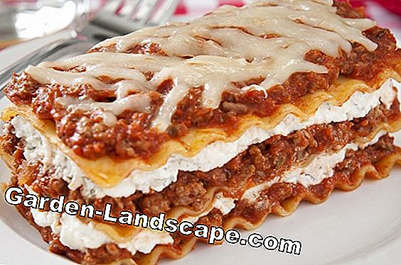 The Lasagna Method: Sebuah pot umbi bunga