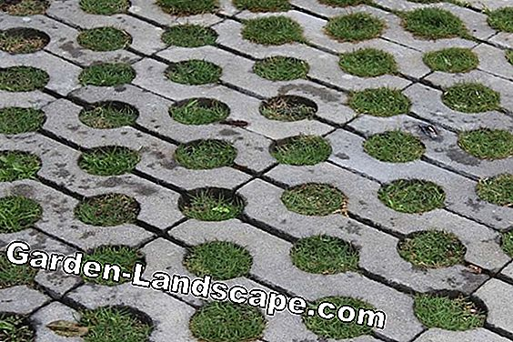 Lawn paving dari Substral