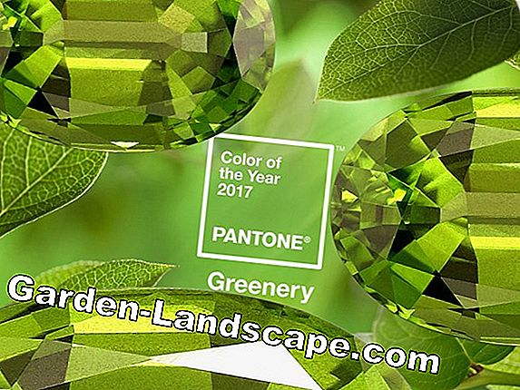 Color Trend 2017: Pantone Greenery