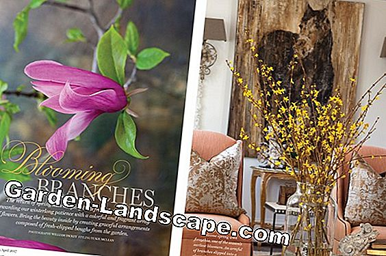 MY BEAUTIFUL GARDEN: March 2017 issue
