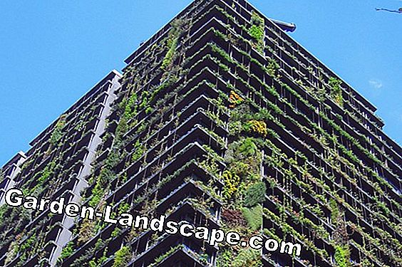 Patrick Blanc: The Art of Vertical Gardens