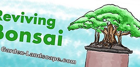 Bonsai - Fundamentals of Care