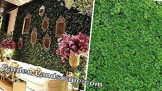 Cut Boxwood - DIY Guide + 25 Tips van experts