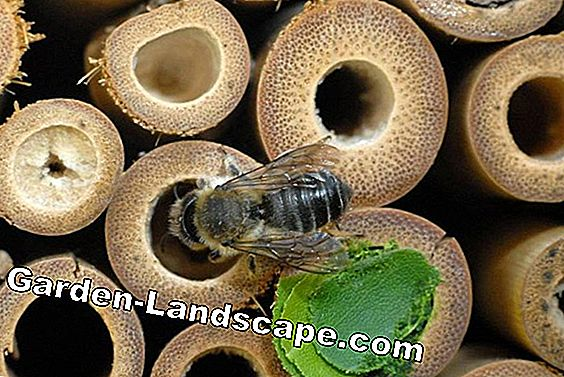 Wild Bee House: een Wild Bee Nest bouwen - DIY Guide