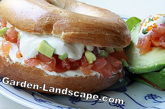 Bagel met avocado room, aardbeien en asperges tips