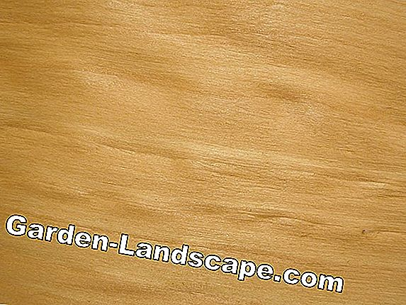 Birch Wood - prijzen, kopen, functies - Wood of birch