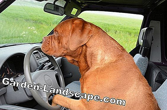 Drive Dogs Out: Houd deze 13 Home Remedies from Land