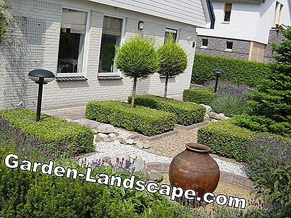Anders tuin tips voor terras en balkon in augustus mijn