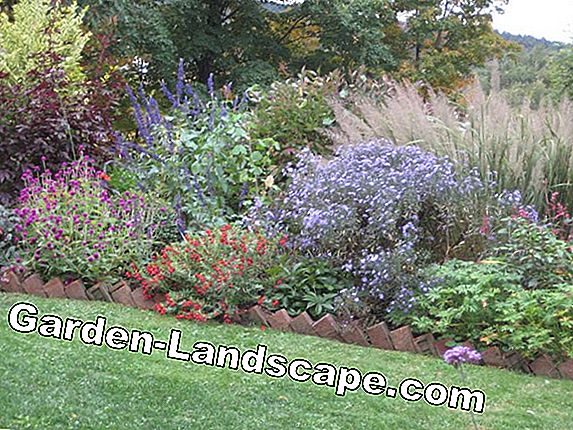 Maak hedge - hedge plants and planting plan
