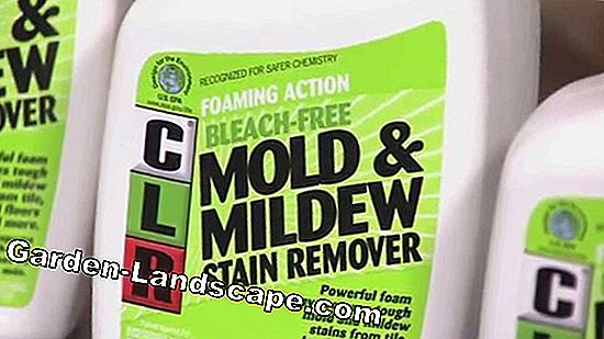 Mold Remover för väggar - Medium & Home Remedies