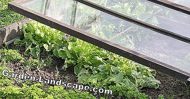 10 Tips around the cold frame