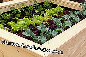 Vegetable Bed Terrace verhoogd bed