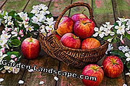 Apple varieties plant differences