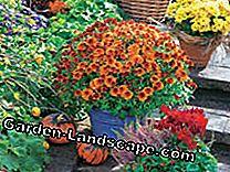 Landscaping versier het terras herfst mijn prachtige tuin