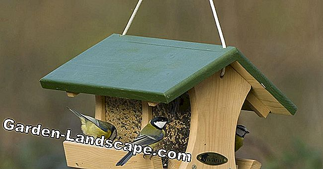 Bird feeders for every taste