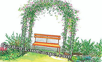 Garden bench with rose arch